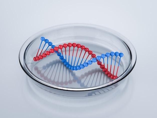 Structure d'hélice d'adn rouge et bleu de rendu 3d