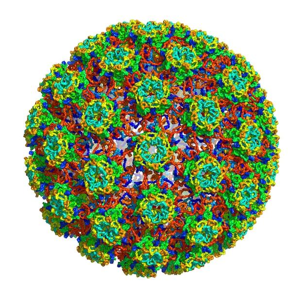 Structure moléculaire 3d du papillomavirus humain de type 16, associé à divers cancers et autres maladies. apd 3j6r
