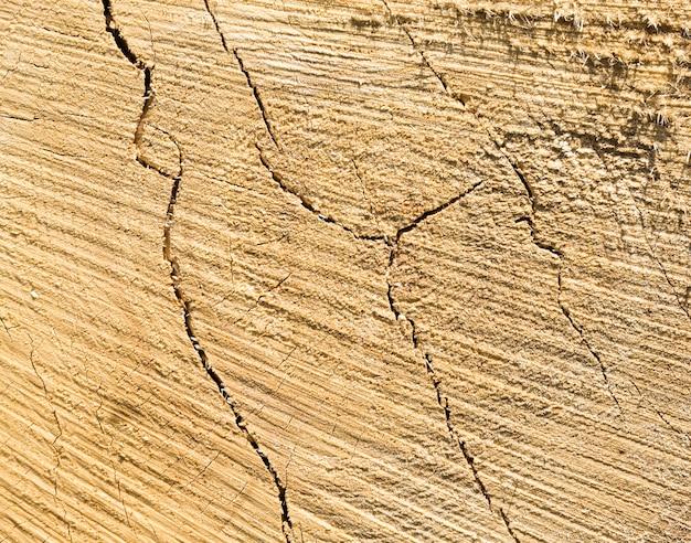 Structure des troncs de pin