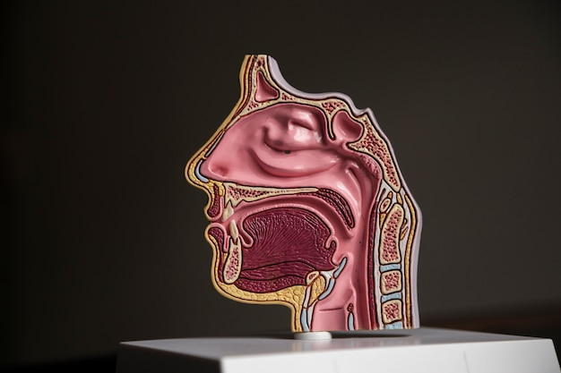 Structures de tête vue de côté