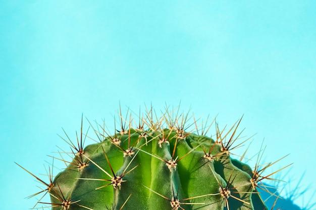 Style d'été de cactus vert. conception artistique. fond jaune