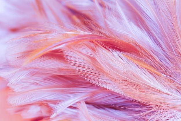 Style flou et couleur douce de la texture de plume de poulet pour le fond, abstrait coloré