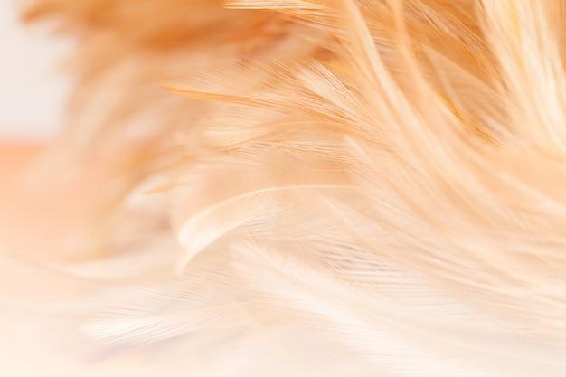 Style flou et couleur douce de la texture de plume de poulet pour le fond