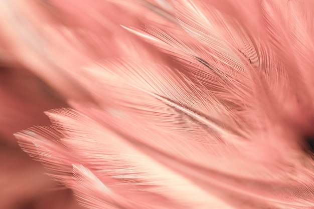 Styles flous et couleur douce de la texture des plumes des poulets pour le fond, art abstrait