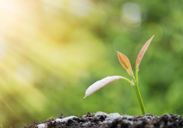 Succès en affaires, arrosage de la jeune plante nouvellement née poussant hors du sol à la lumière du soleil