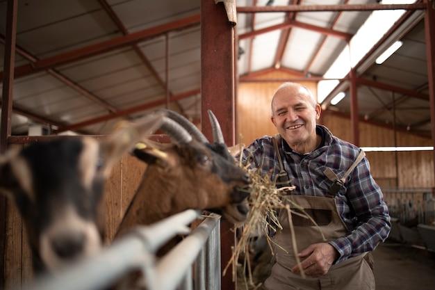 Succès fermier souriant nourrir les animaux domestiques de chèvre avec des aliments biologiques de foin
