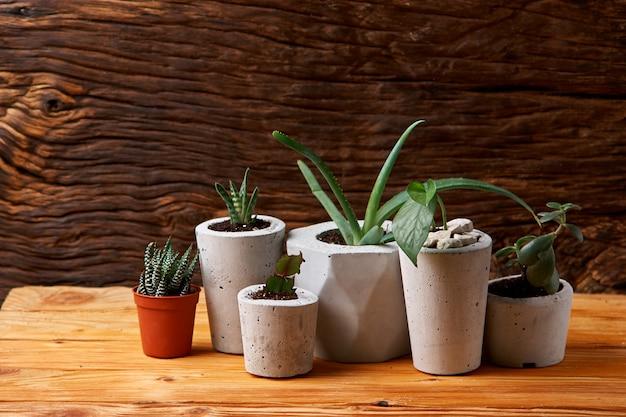 Succulentes, aloès et crassula dans un pot en béton.