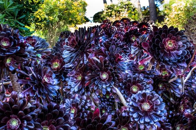 Succulentes cactus dans une jardinière
