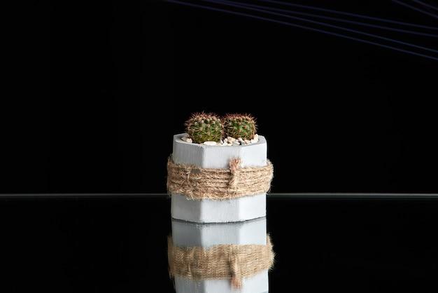 Succulentes, cactus dans un pot en béton sur fond noir.