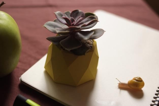 Succulentes dans un pot en béton jaune sur une table avec un petit escargot près de apple et un cahier.