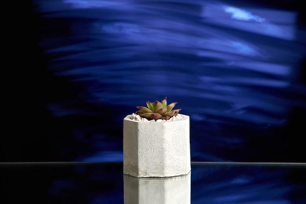 Succulentes dans un pot en béton à la lumière bleue.