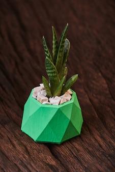 Succulentes dans un pot en béton vert sur bois.