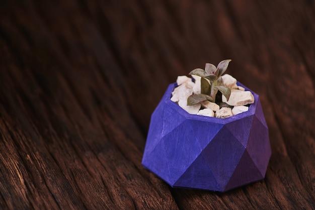 Succulentes dans un pot en béton violet sur bois.