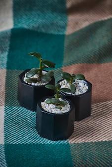 Succulentes en pot de béton noir total sur millésime.