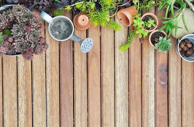 Succulentes en terrasse