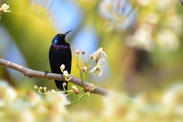 Sunbird sur la branche d'arbre dans la nature