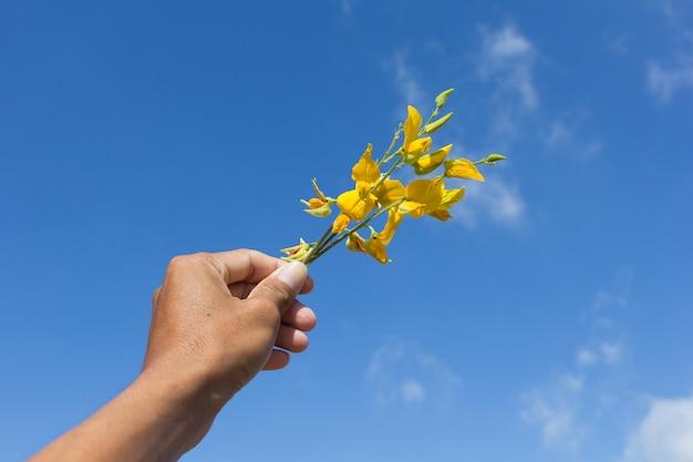 Sunn chanvre fleurs à portée de main