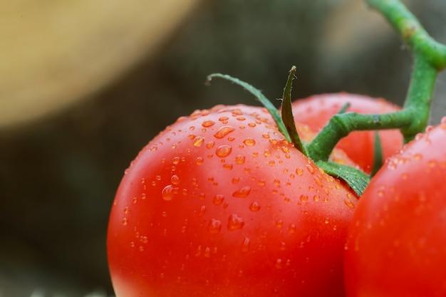 Super coup de macro de surface de tomates avec des gouttes d'eau. mise au point sélective avec très