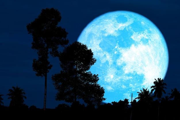 Super moisson lune bleue et silhouette de grands arbres dans le ciel nocturne