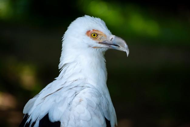 Superbe portrait d'oiseau dans la nature sauvage