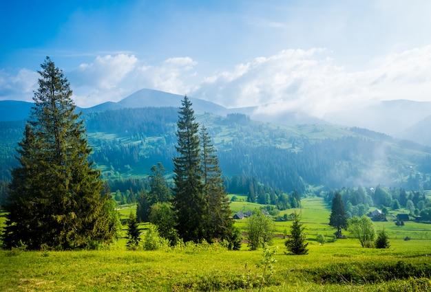 Superbe vue magnifique sur les arbres qui poussent sur les collines