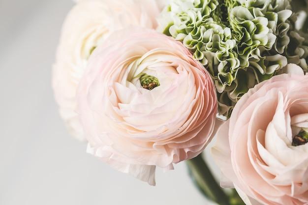 Superbes fleurs de renoncules roses fraîches, fond blanc.