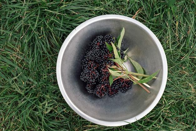 Sureau mûr cru dans un bol debout sur une herbe verte vue de dessus des grappes de fruits de sureau noir...