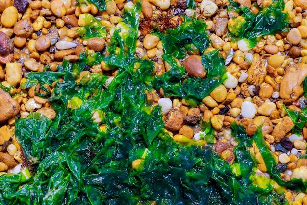 Surface abstraite avec des cailloux et des algues