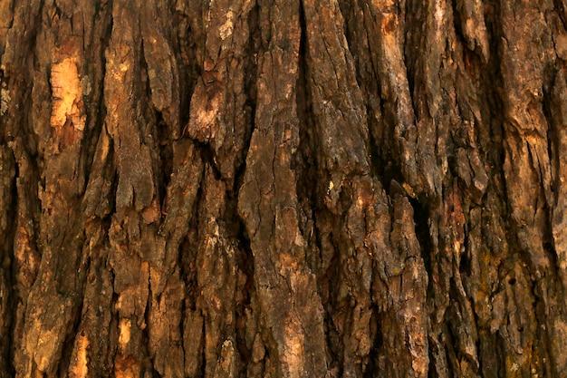 Surface de l'arbre en bois gros plan