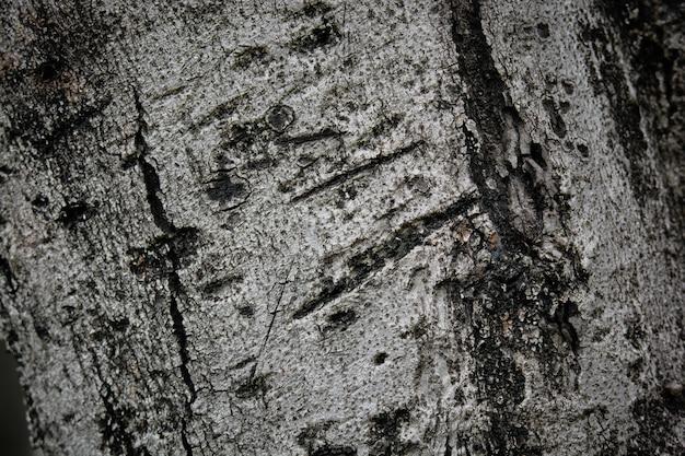 La surface de l'arbre brun, texture d'écorce de bois