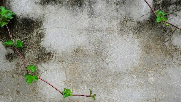 Surface de ciment et de lierre