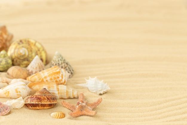 Surface d'été avec des coquillages sur la plage