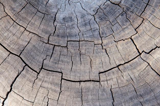 Surface fissurée en bois