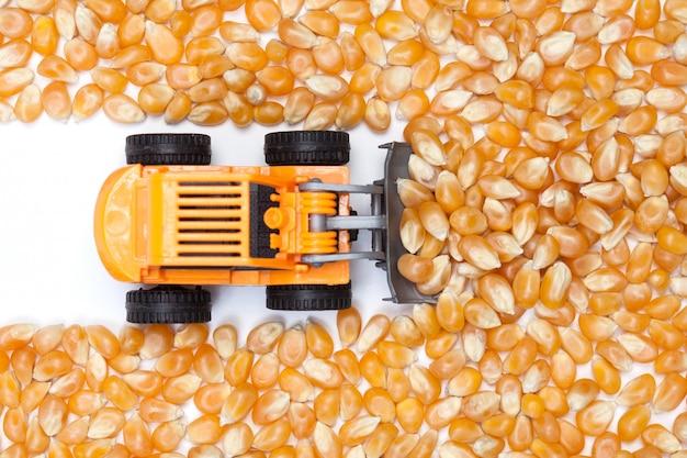 Surface de grains de maïs secs sur une table blanche avec petit tracteur.