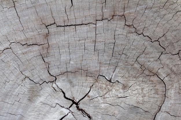 Surface sèche et fissurée du bois dur