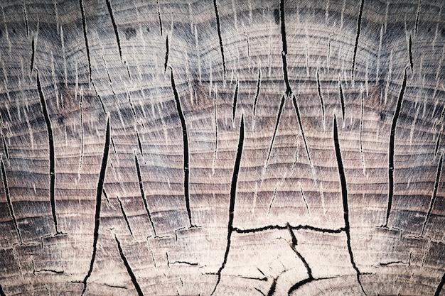 Surface d'une souche en bois