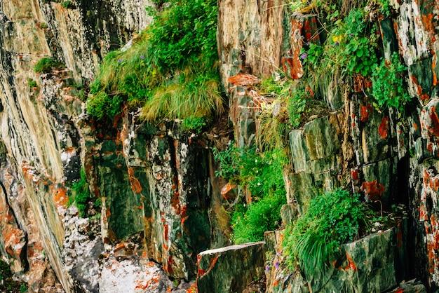 Surface stratifiée rocheuse moussue orange de montagne avec de riches végétations de hautes terres. plantes, mousses et lichens sur falaise. texture détaillée du flanc de la montagne avec espace copie. roche texturée avec verdure.