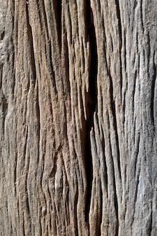 Surface de la texture du bois avec ancien motif naturel