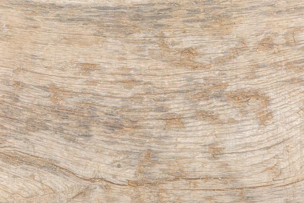La surface de la texture du tronc d'arbre. contexte. espace pour le texte, les inscriptions.
