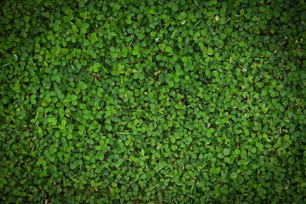 Surface de texture de feuilles vertes herbe vue de dessus petite plante feuille verte nature fond