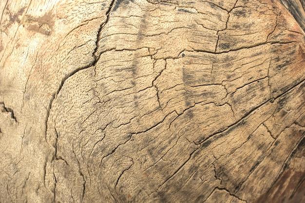 Surface texturée du vieil arbre.