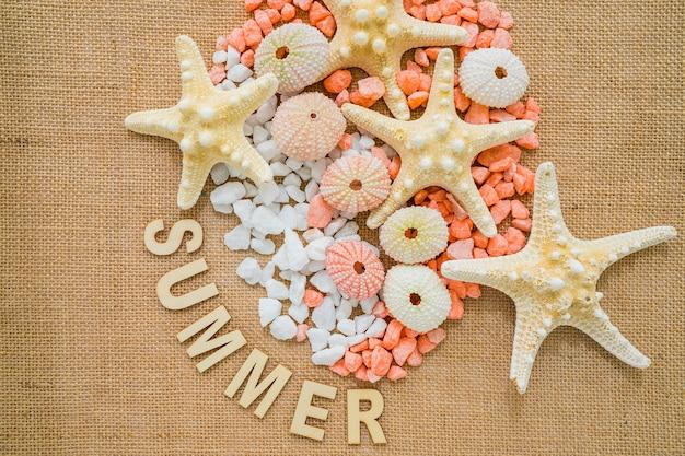 Surface de toile avec des oursins et des étoiles de mer