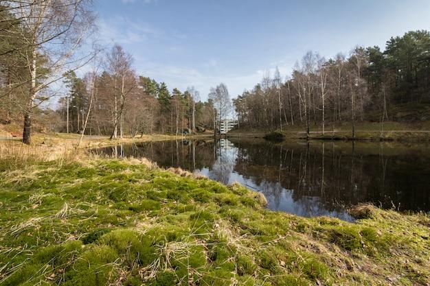 Svarttjern, un étang à grenouilles et crapauds à baneheia à kristiansand, norvège