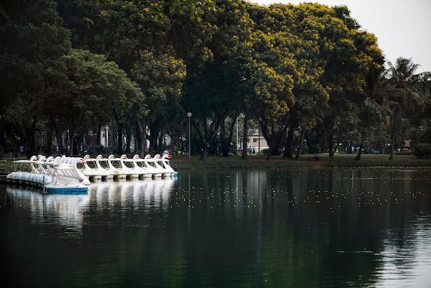 Swan paddle boats à lumphini park, bangkok
