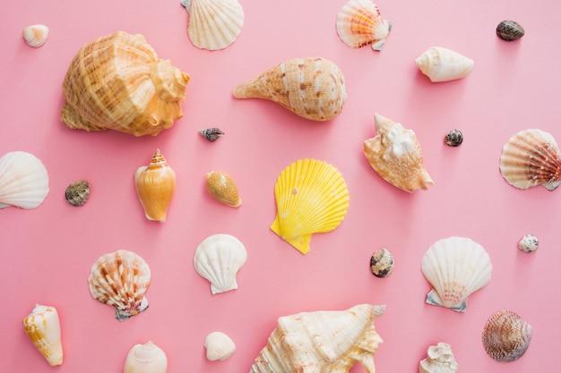 Symbole de coquillages des vacances d'été sur la plage sur fond rose.