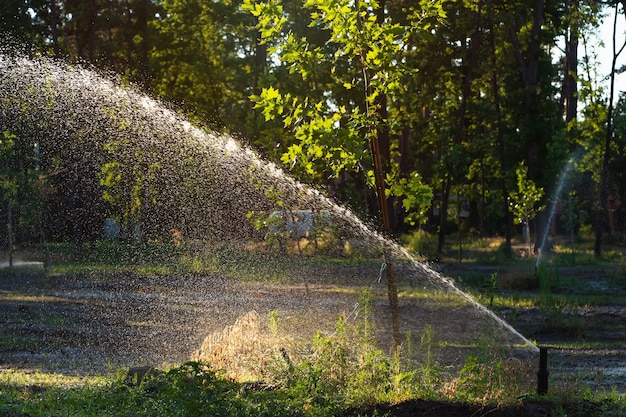 Système d'arrosage automatique arrosant la pelouse dans le jardin.