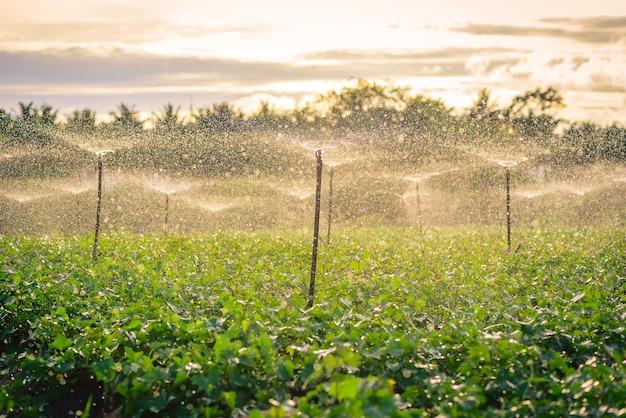 Système d'arrosage d'eau fonctionnant dans un potager vert au coucher du soleil