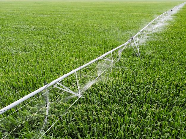 Système d'irrigation sur un champ de maïs cultiver du maïs dans les champs avec un système d'irrigation