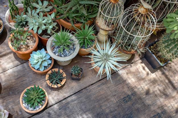Table en bois de jardin en plein air décoration cactus