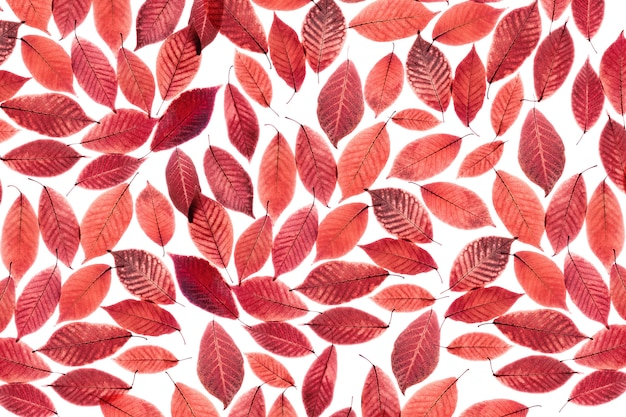 Table de feuilles rouges transparentes.